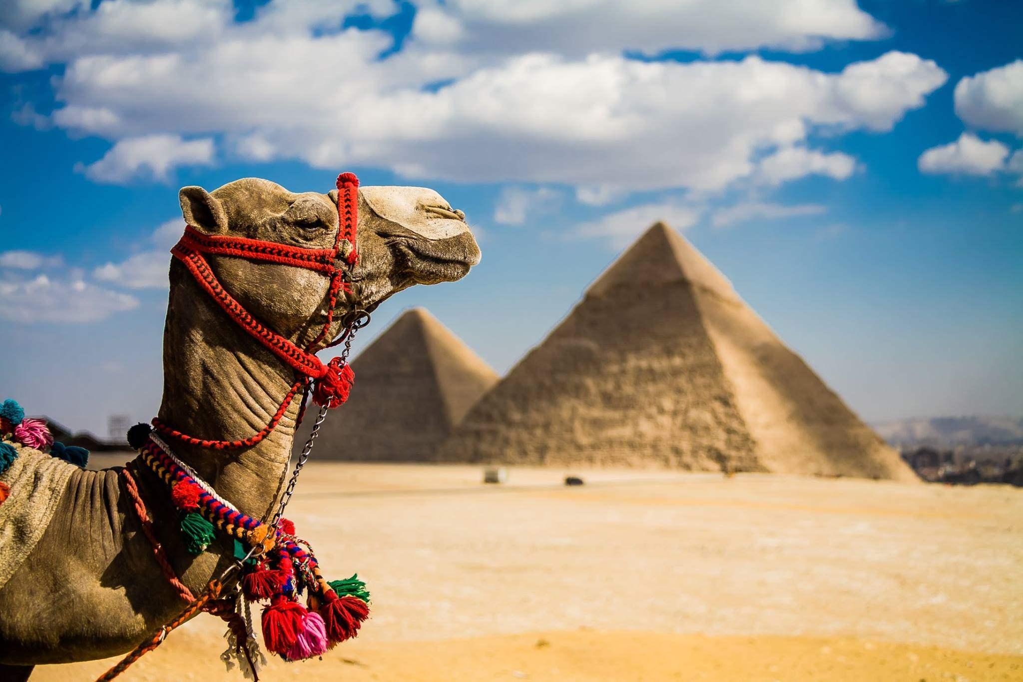 mozhno li rossiyanam letet v egipet