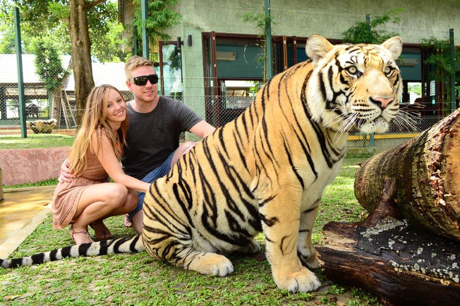 korolevstvo tigrov na phukete