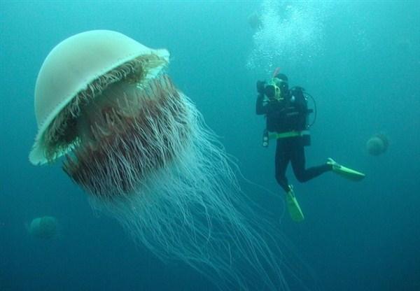 meduzy vo vetname