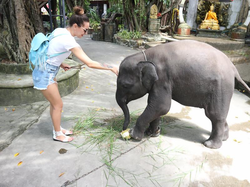 zoopark na phukete 1